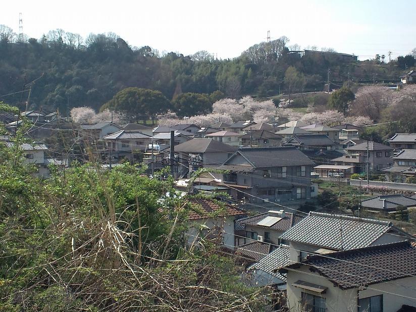 桜-2010-1