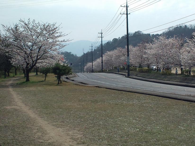 桜-2010-2