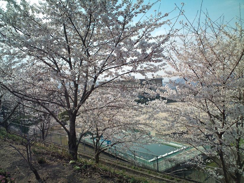 桜-2010-5